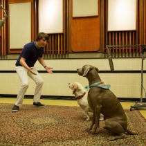 brian-wilson-and-his-dogs-banana-and-louie-pet-sounds